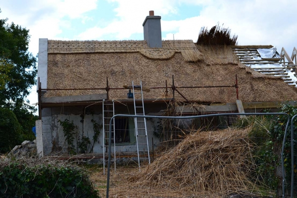 cost of roof thatchng